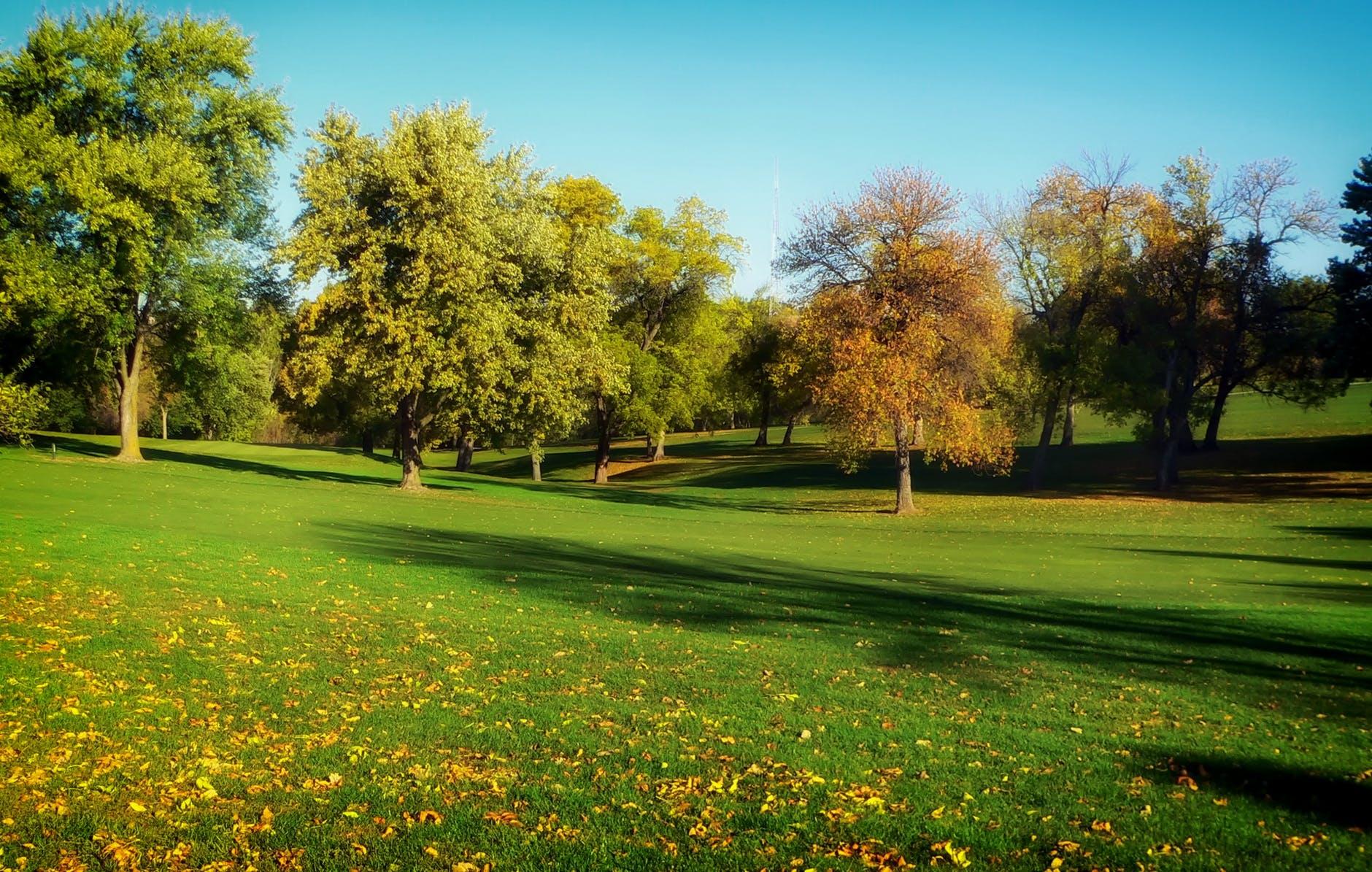 trees grass lawn park